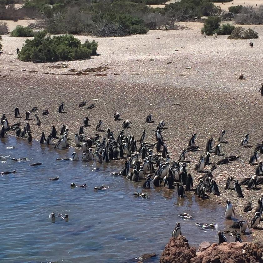 penguins at shore